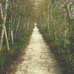 """I dreamt of a birch tree lined path"" by zoeythelioness"