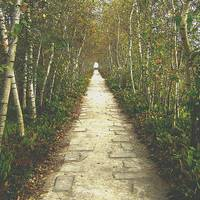 I dreamt of a birch tree lined path