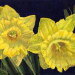 """""""Daffodil Couplet"""" by VikkiKing"""