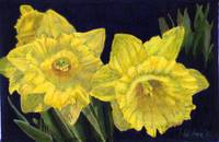 Daffodil Couplet