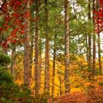 """""""Autumn Canvas"""" by Groecar"""