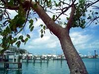 Key West Dock