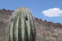Saguaro Encounter