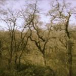 """Wild Forest"" by S_Joynson"