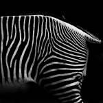 """""""Wild lines"""" by Erlib"""