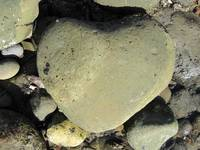 Heart Shaped Rock on the Beach