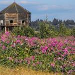 """The Old Fort Vancouver"" by DeVonna"