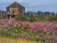 The Old Fort Vancouver