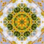 """Yellow Flower Mandala"" by nectaroflife"