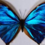 """""""blue"""" by Nikki11"""