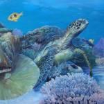"""""""Green Sea turtle"""" by Reefies"""