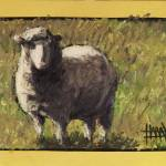 """Sheep in Grass at Hendrick"