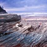 """Oswald West State Park -- Oregon"" by dennisherzog"