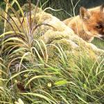 """""""Fox"""" by Reefies"""