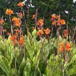 """Garden Spires"" by sgrace"