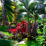 """""""Puerto Vallarta Garden"""" by jbjoani2"""