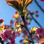 """""""Spring Begins"""" by SiennaBleu"""
