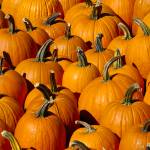 """Pumpkins"" by photocatphoto"