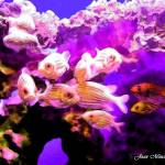 """Fish in Maui Ocean Center"" by jbjoani2"