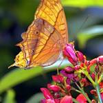 """""""Sunlit Butterfly"""" by SiennaBleu"""