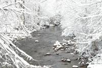 Snowy Branches Surround a Winter Stream
