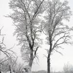 """Silhouettes of two trees in winter."" by Tasha1111"