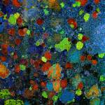 """Gravestone Lichens"" by kenart"