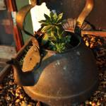 """Cactus Tea"" by gaelicwolf"