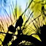 """Hummingbird Silhouette"" by MelanieDoty"