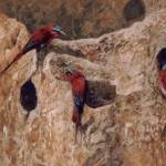 """Carmine Bee eaters"" by Reefies"