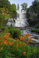 Tiger Lilies and Chittenango Falls