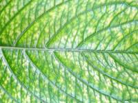 Green Alive Leaf