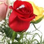 """Roses"" by melking"