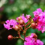 """Canyon flower"" by jiroyuki"