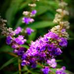 """""""Purple Haze"""" by LBCPhotography"""