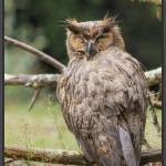 """""""Owl Wet and Weary"""" by Jimaustinjimages"""