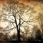 """""""Late Atumn"""" by sorinapostolescu"""