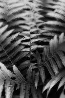Ferns in Black and White by Jim Crotty