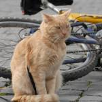 """""""He told me to take a look at his bike ..."""" by rpalandri"""