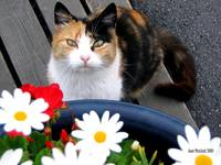 cat and daisies