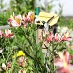 """Garden Flora and Fauna_Hummingbird feeding"" by SBCountyImages"