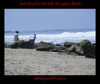 Searching For Sea Life At Laguna Beach