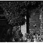 """""""overgrown door"""" by markwaldron"""