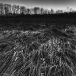 """Winter Prairie in Black and White by Jim Crotty"" by jimcrotty"