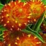 """Yellow Stars on an Orange Sky"" by bleij50"