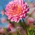"""Pink dahlia"" by ScovoPhoto"
