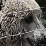 """bear"" by trevor"