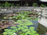 Lotus Pond Garden area