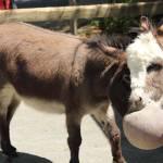 """""""donkey"""" by robemory"""
