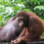 """Borneo 2006 John-099"" by JohnWillens"